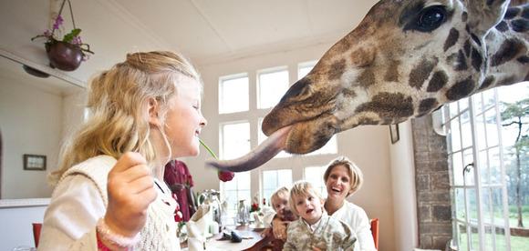 Las jirafas entrarán para que los niños les den de desayunar