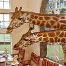 El viaje soñado a Kenya. Duerme en un hotel rodeado de Jirafas