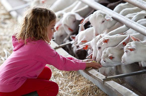 Los niños aprenderán dando de comer a los animales