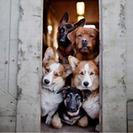 ¿Comprar un perro?