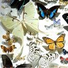 Semana Científica en el Museo de Ciencias Naturales de Madrid