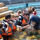 Baño con osos marinos en Faunia