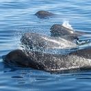 Explora en familia el mundo de los delfines en Tarifa