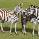 Acampar con la familia en un zoo