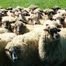 Excursión con niños: tras los pasos de vaqueros y pastores