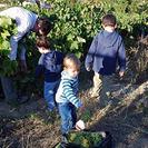 La vendimia, excursión con niños