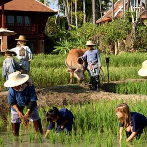 Descubrir Tailandia y su cultura. Adoptar un elefante o plantar arroz en Chiang Mai. Tailandia.