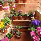 Cómo llenar de flores un balcón
