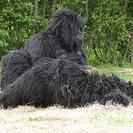 Conoce a la familia de gorilas de NationalGeographic