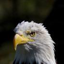 Excursión con niños para ver águilas