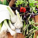 6 Recetas de Platos con Verduras para Niños