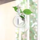 DIY: Convierte una bombilla en un florero