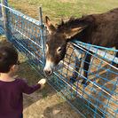 Visita Burrolandia, un lugar dedicado a preservar y estudiar al burro