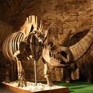 'Imanes de animales de la edad glaciar' en el Museo del Mamut, Barcelona