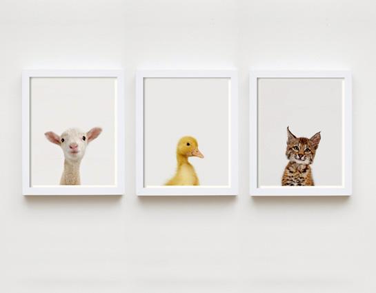 Laminas animalitos para decorar imagui - Laminas para decorar ...